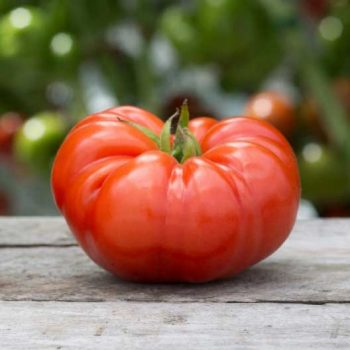 You can thank Cortez for the Beefsteak Tomato.