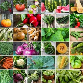 5 Favorite Vegetable Seeds