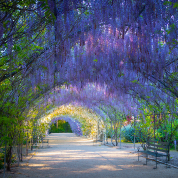 6 Breathtaking Gardens to Visit in 2021