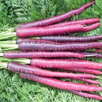 5 Heirloom Vegetables to Plant in Your Fall Garden