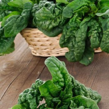 Spinach – How to Grow From Seed