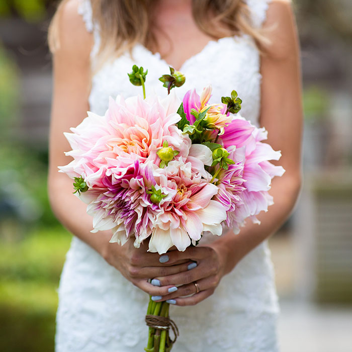 Dahlia Bulbs (Dinnerplate) - Bridal Bouquet Mix