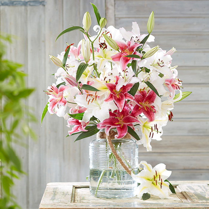 Oriental Lily Bulbs (Spring-Planted) - Mix