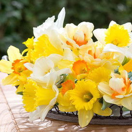 Daffodil Bulbs - Easter Basket Mix