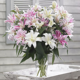 Lily Bulbs (Spring-Planted) - Double Pastel Mix