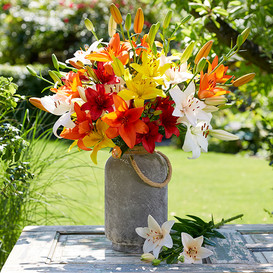 Asiatic Lily Bulbs (Fall-Planted) - Mix