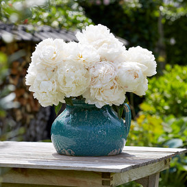 Peony Roots (Spring-Planted) - Bowl of Cream