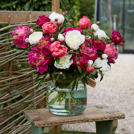 Peony Roots (Fall-Planted) - Pink & White Mix