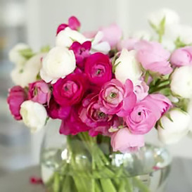 Ranunculus Bulbs (Spring-Planted) - Pink & White Mix