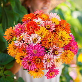 Zinnia Seeds - Burpeeana Giants Mix