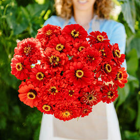 Zinnia Seeds - Will Rogers