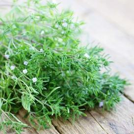 Summer Savory Seeds