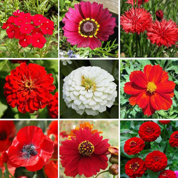 Big-Red-Flower-Seed-Mix