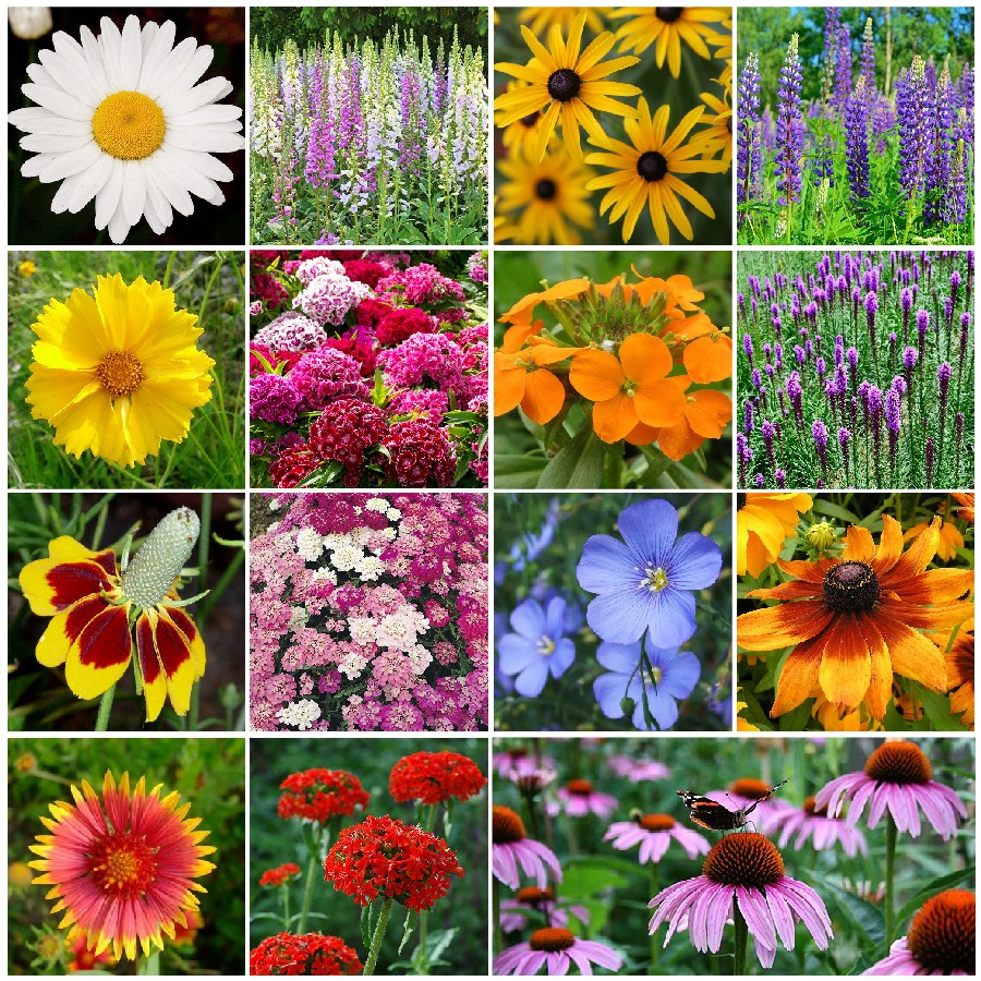 All Perennial Wildflower Seed Mix Quick View