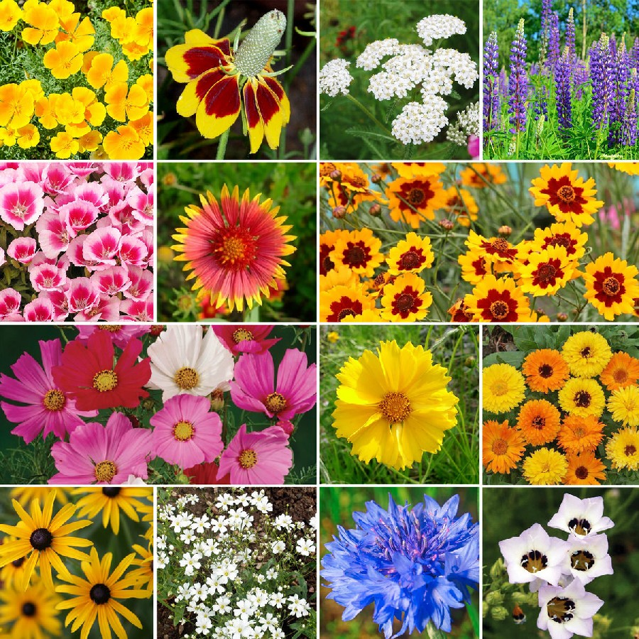 Burst of bloom annual perennial wildflower seed mix bird butterfly wildflower seed mix quick view mightylinksfo