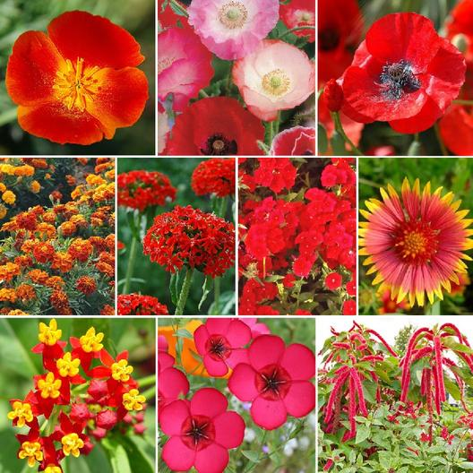Red Head Red Flower Seed Packet Collection 7 Individual Packets