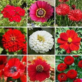 Big Red Mix - Red Flower Seed Mix