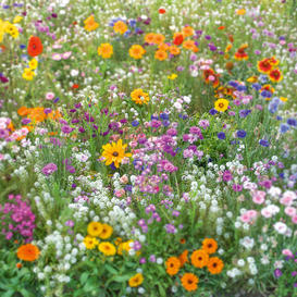 Flowery Fields Forever Flower Seed Mix