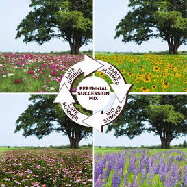 Endless Summer - Perennial Succession Mix