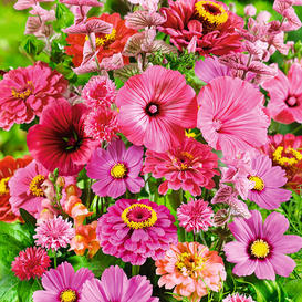 Pink Perfection Flower Seed Mix