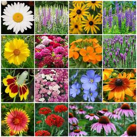 All Perennial Wildflower Seed Mix - Ounce
