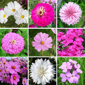 Tickled Pink - Pink Flower Seed Mix