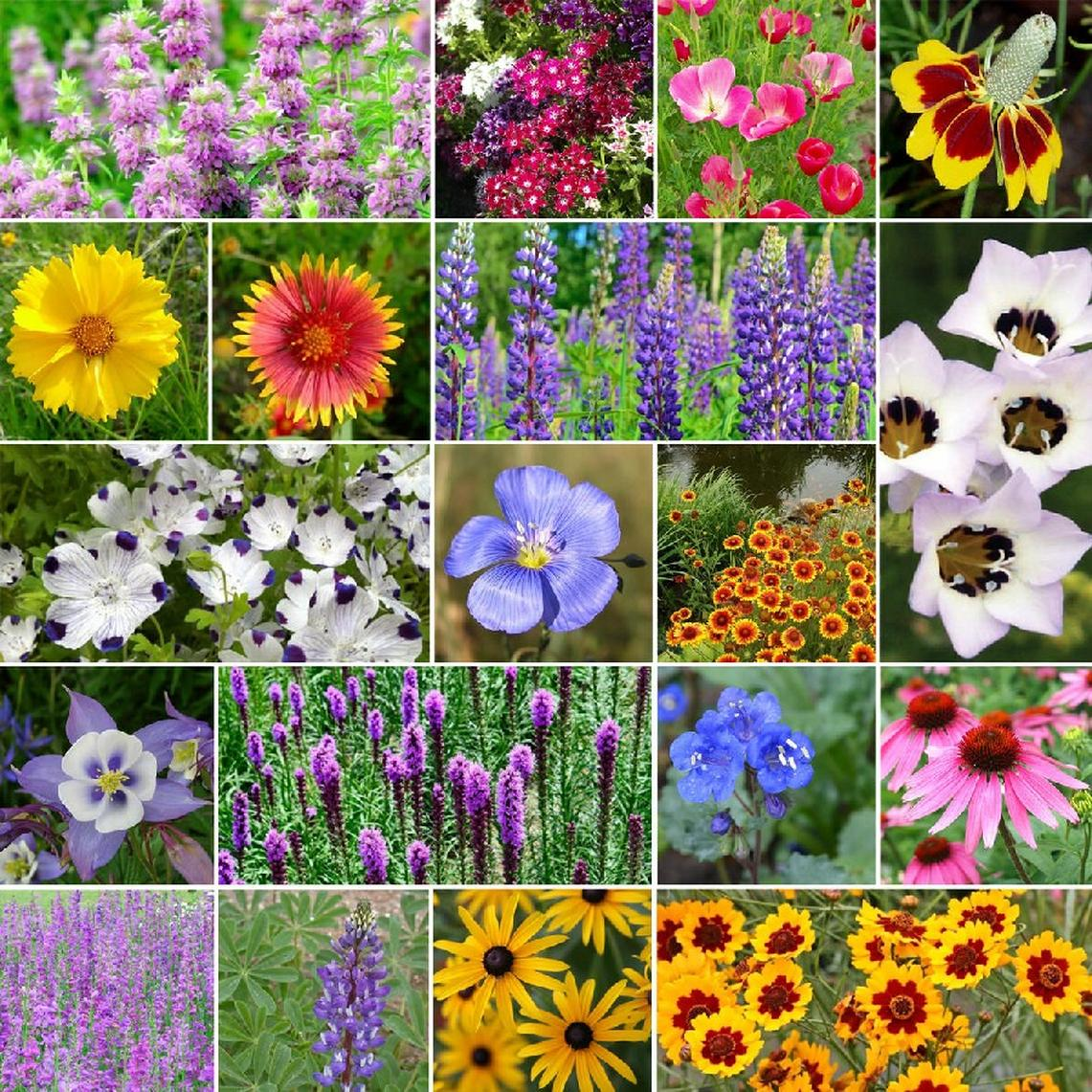 North American Native Wildflower Seed Mix