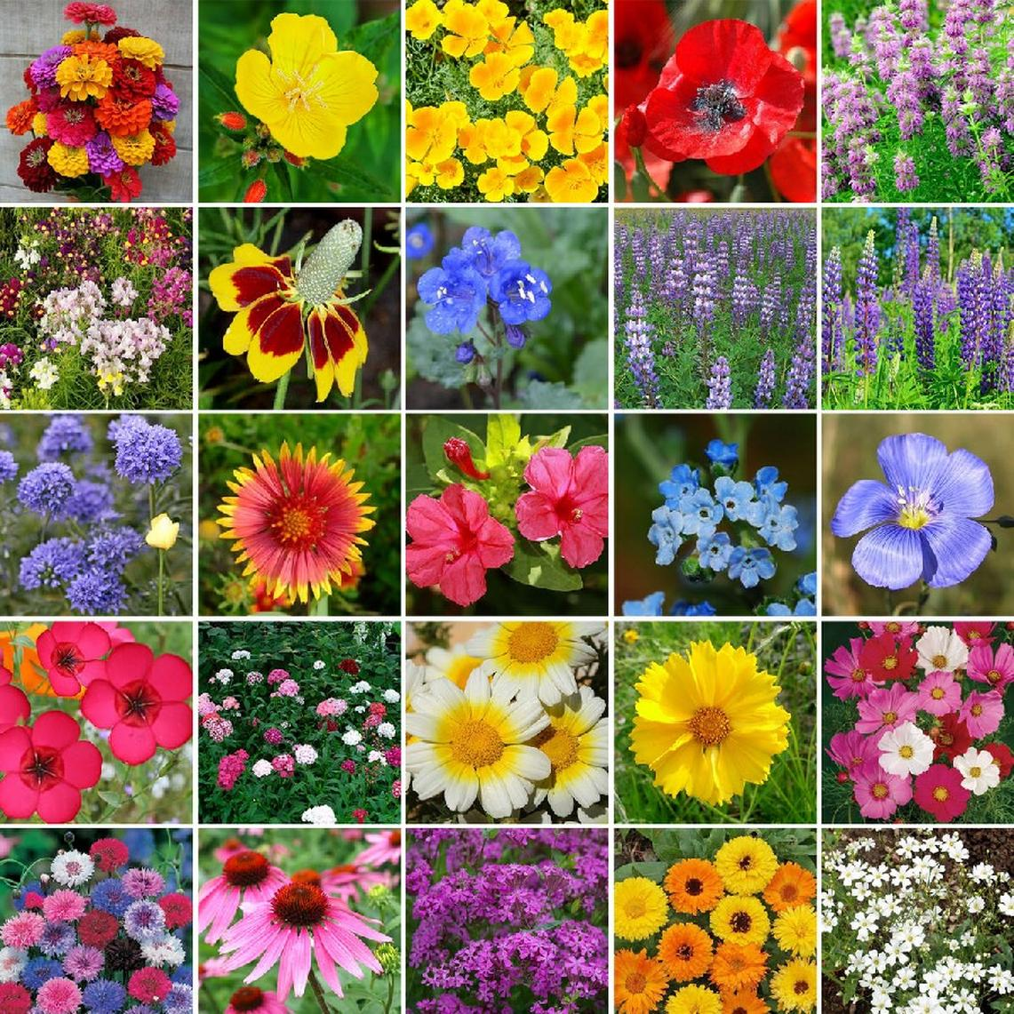Heirloom Flower Seed Mix
