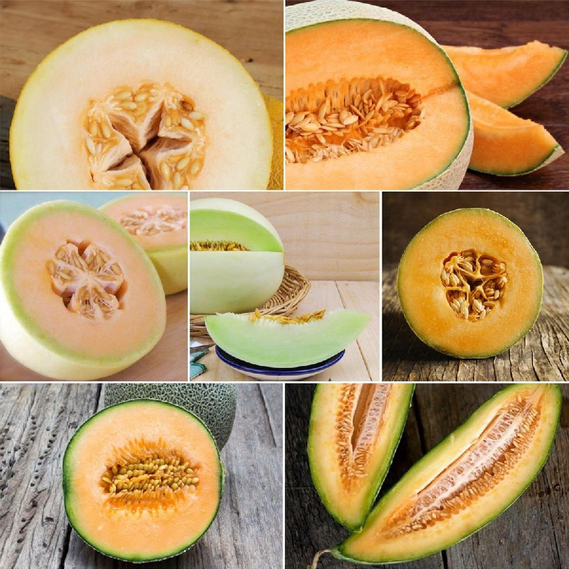 Nice Melons- Melon Collection