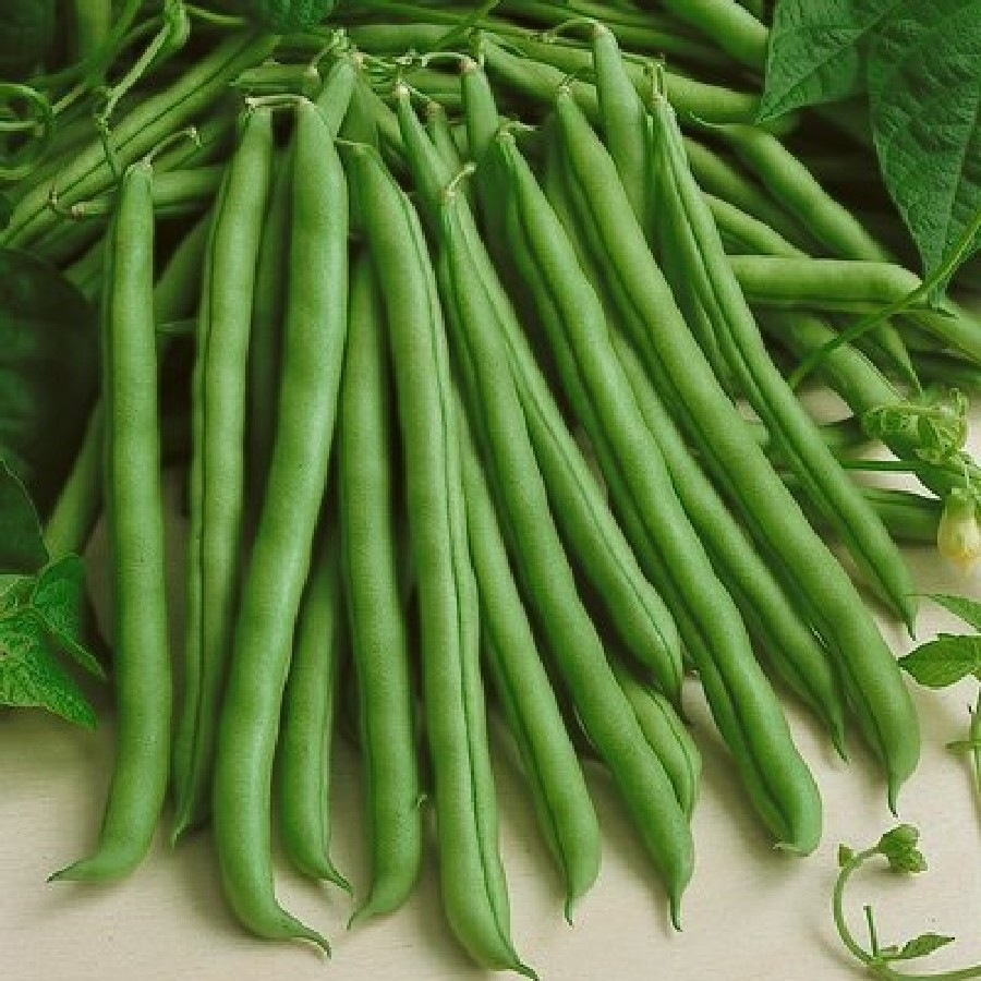 Bean Seeds (Organic - Bush) - Provider
