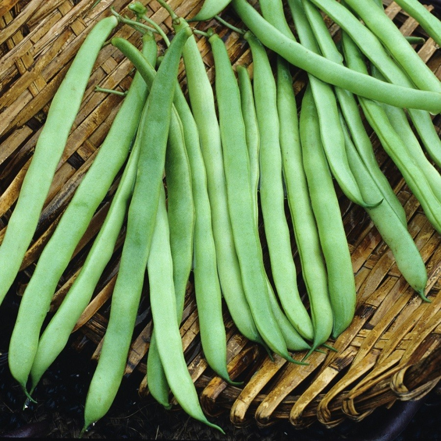 Bean Seeds (Bush) - Bountiful