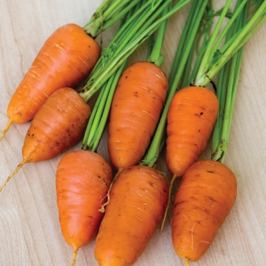 Carrot Seeds - Royal Chantenay