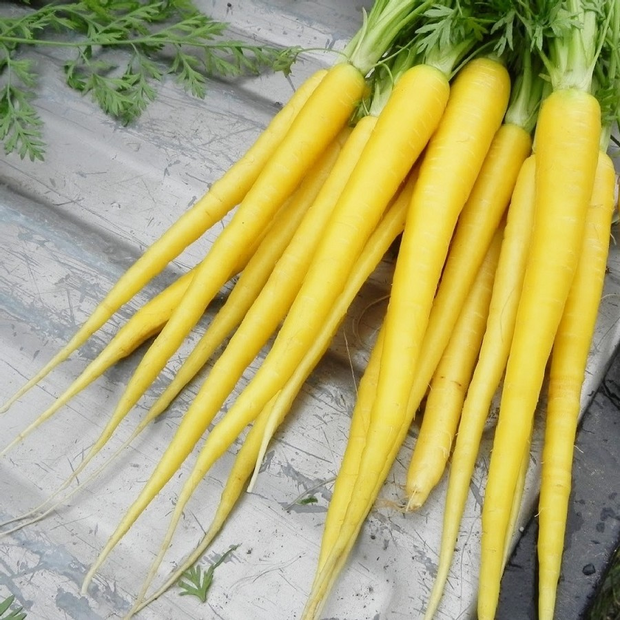 Carrot Seeds - Solar Yellow