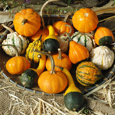 Gourd Seeds - Small Mix | Vegetable Seeds in Packets ...