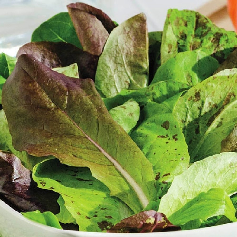 Tricolor Romaine Mix Lettuce Seeds