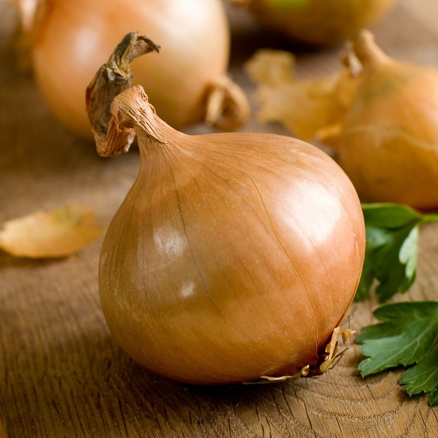 Onion Seeds (Short Day) - Texas Early Grano