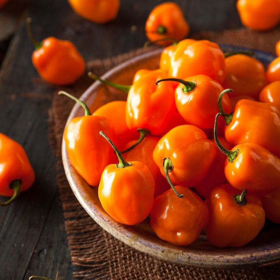 Hot Pepper Seeds - Habanero Orange