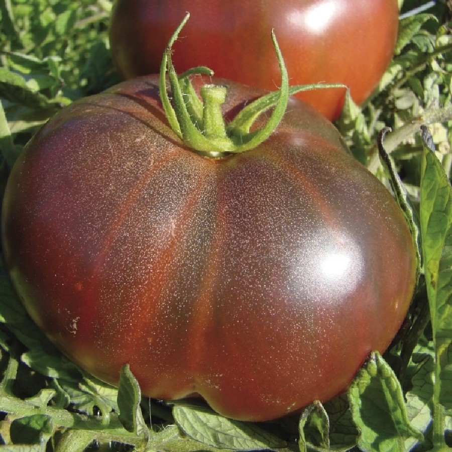Tomato Seeds - Black Krim