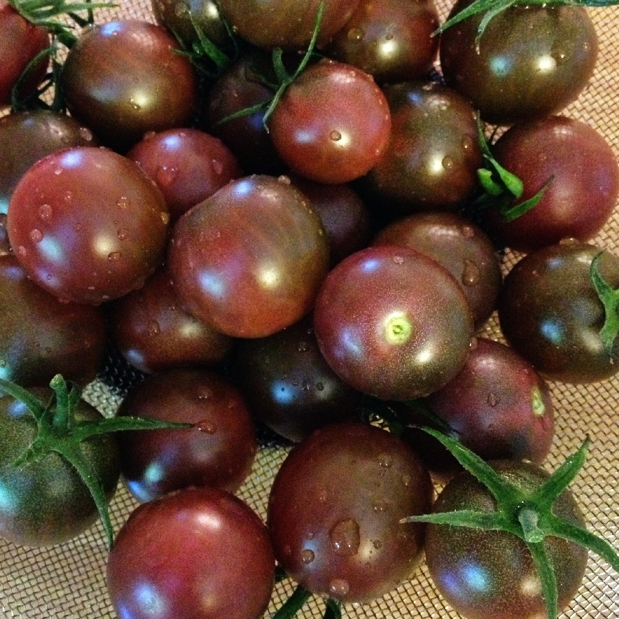Tomato Seeds (Organic) - Black Cherry