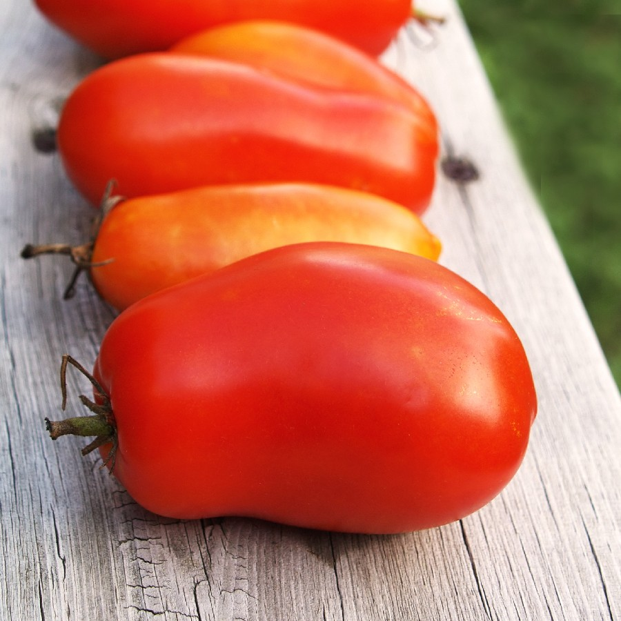 how to grow roma tomatoes from seed