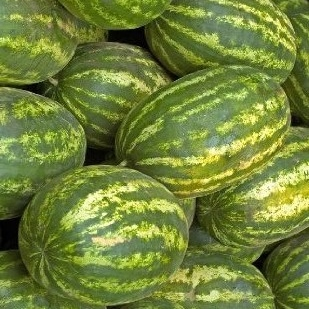 Watermelon Seeds - Klondike Blue Ribbon Striped