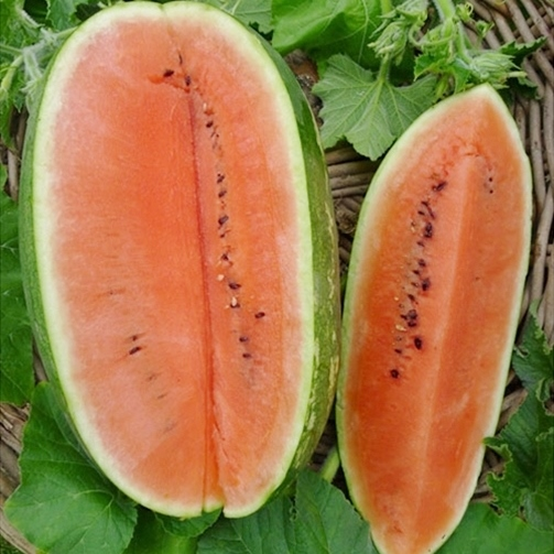 Watermelon Seeds (Organic) - Jubilee Improved