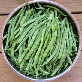 Bean Seeds (Pole) - Blue Lake FM1K