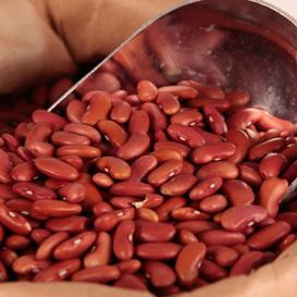 Bean Seeds (Bush) - Light Red Kidney
