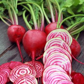Beet Seeds - Chioggia