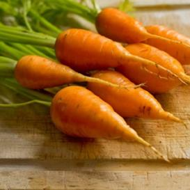 Carrot Seeds - Chantenay Red Cored