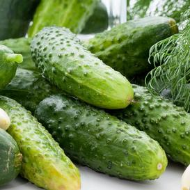 Cucumber Seeds (Pickling) - Boston Pickling