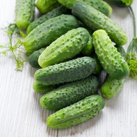 Cucumber Seeds (Pickling) - SMR 58