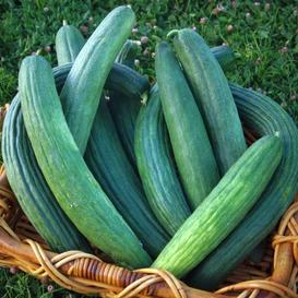 Cucumber Seeds - Armenian Dark Green