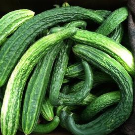 Cucumber Seeds - Suyo Long